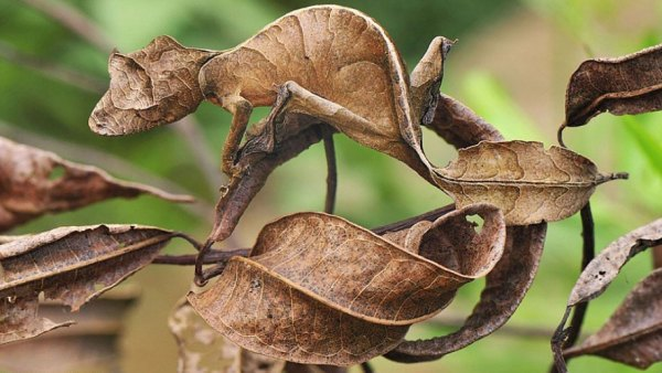 animal-camouflage-examples2