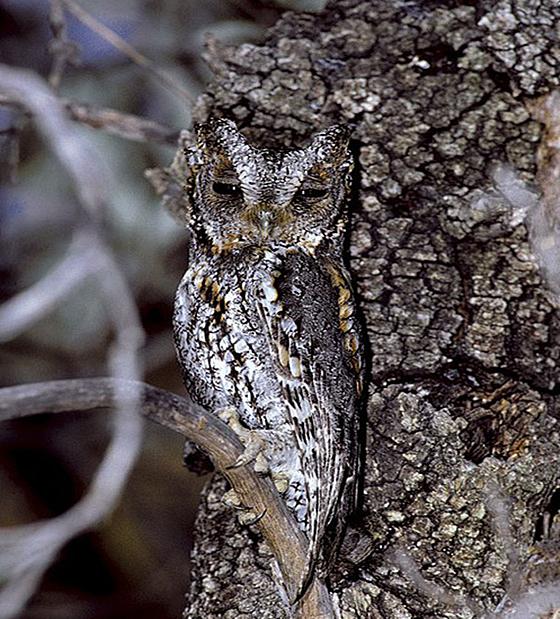 owl_camouflage